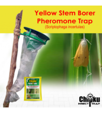 Chipku Pheromone Funnel Trap with YSB Lure (Combo Pack of 10)