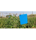 Chipku Blue Sticky Trap A4 (Pack of 50)