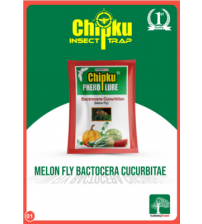 Chipku Melon Fly Lure (Pack of 5)