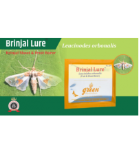 Brinjal Pheromone Lure for Brinjal Fruit & Shoot Borer
