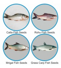 Fishery Seeds small size