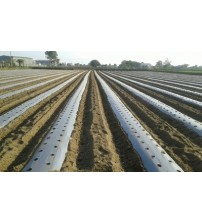 Extra Punching Cost on 1 Mulching Roll